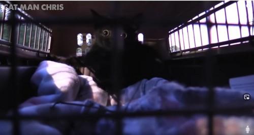ケージの中の黒猫