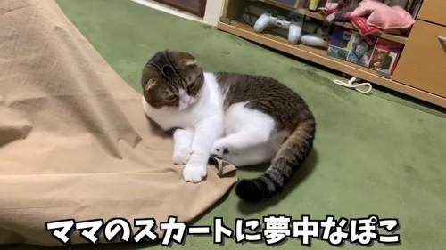 寝転がって後ろ足で布を蹴る猫