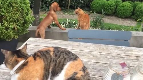 近寄る犬に威嚇する猫