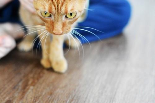 逃げそうな猫