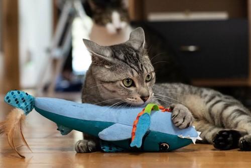 魚型のおもちゃで遊ぶ猫