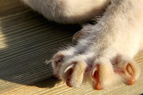 猫の鋭い爪アップ