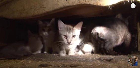 家具の隙間に集まる猫