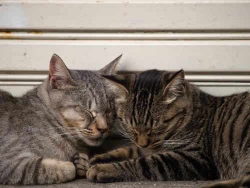 頭をつけて寝ている2匹の猫