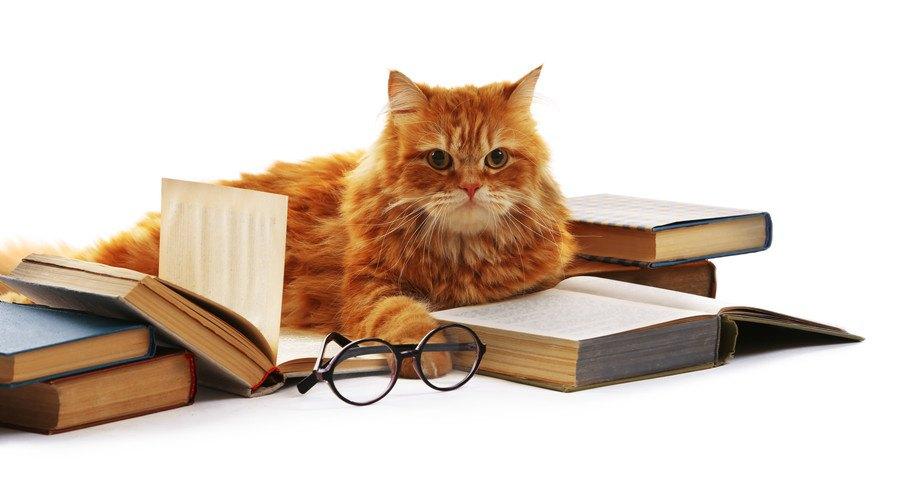 本と一緒に居る猫