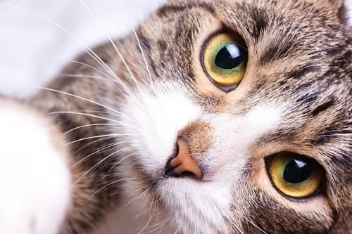 手を伸ばす猫の顔アップ