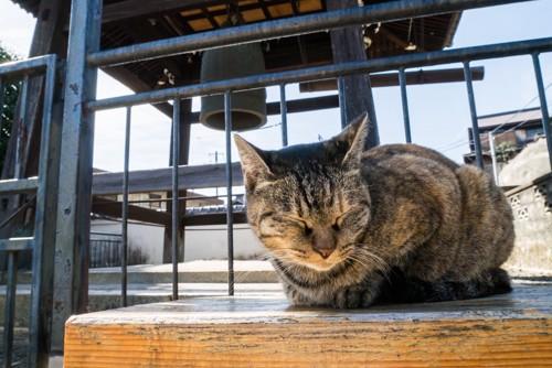 寺のさび猫