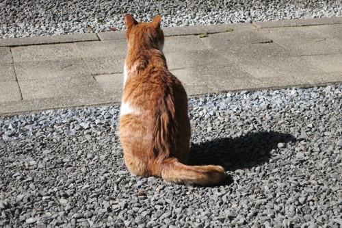 道に座る野良猫の後ろ姿