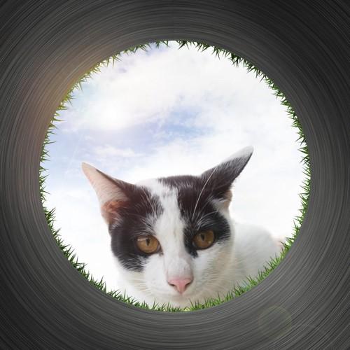 穴から見ている猫