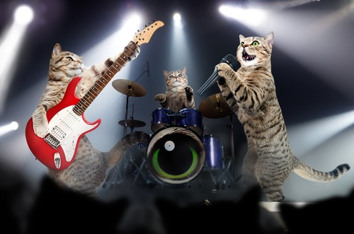 猫のバンド