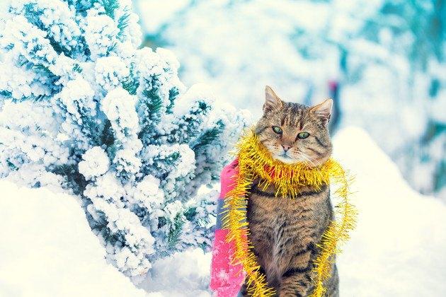 クリスマスファッションの猫