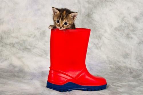 長靴の中の猫