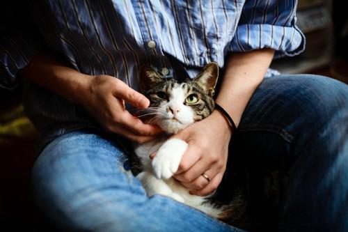 猫をなでる人