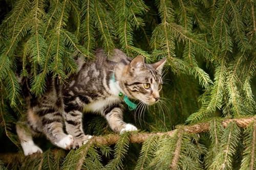 木の枝の上を歩く猫