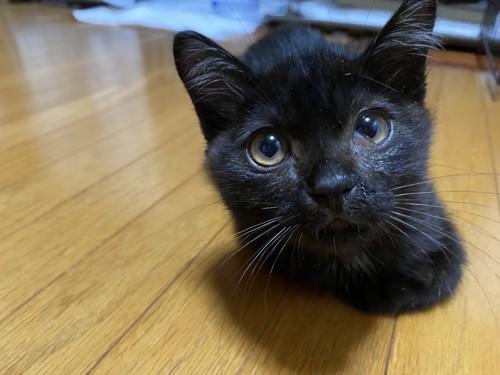 顔が大きく写っている子猫