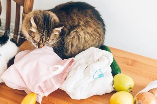 袋の確認をする猫