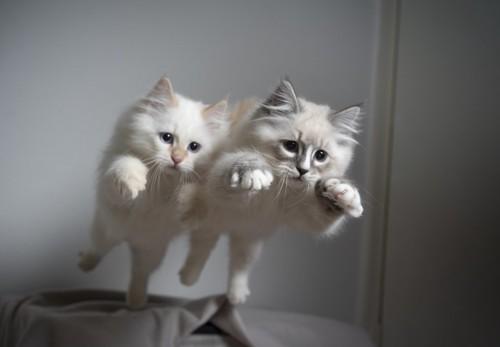 飛ぶ二匹の猫