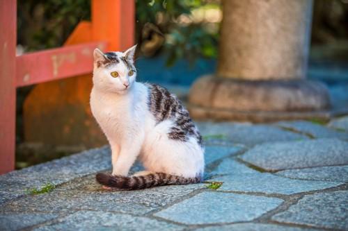 神社に居る猫