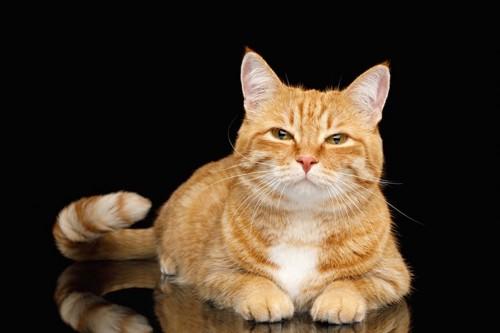 尻尾を振ってこちらを見つめる猫