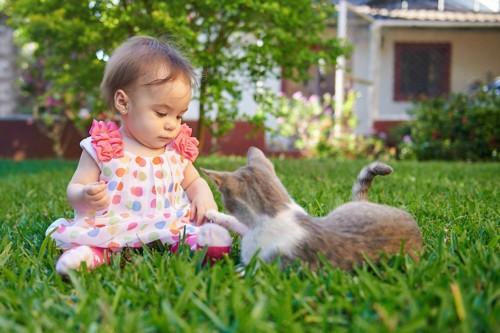 赤ちゃんの手に自分の手を乗せる子猫