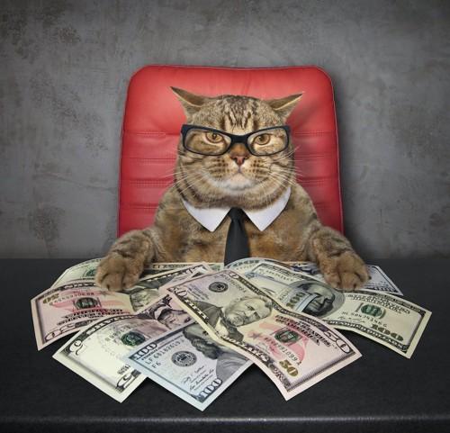 椅子に座った眼鏡をかけた猫とたくさんのお札
