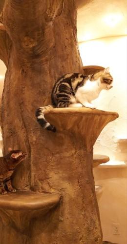 木に猫がいる