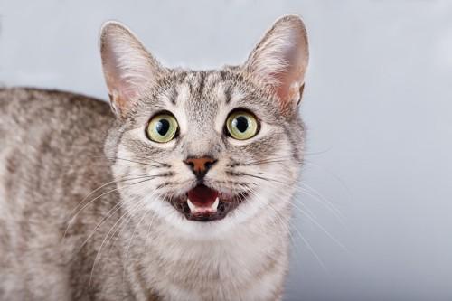 見上げて鳴く猫