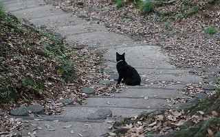 石段の黒猫