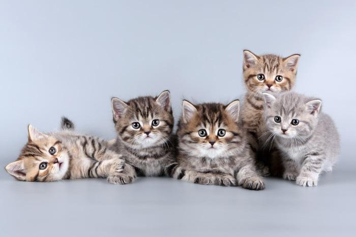 5匹の子猫
