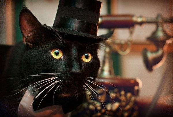 ダンディーな黒猫