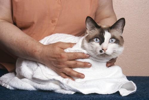 タオルで包まれる猫