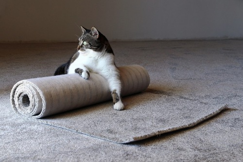 絨毯に乗る猫