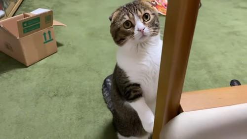 後ろ足で立つ猫