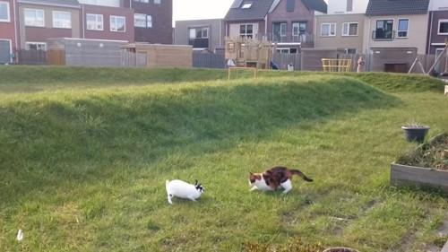 向かい合う猫たち
