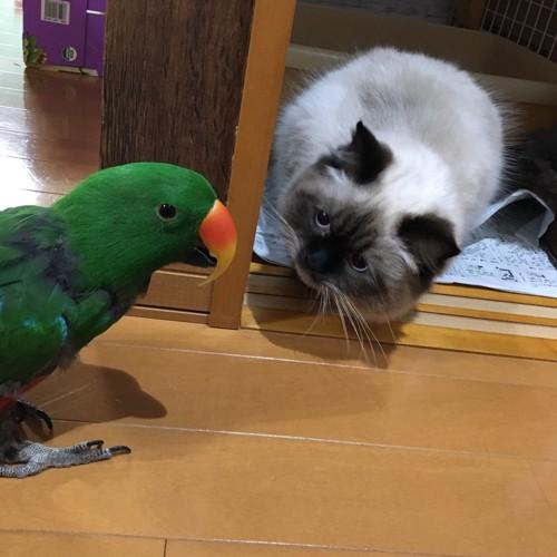 仲良しな猫とオウムのイラスト