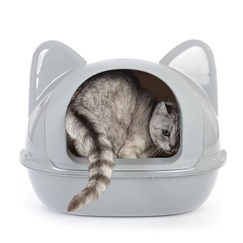 猫型トイレに入る猫