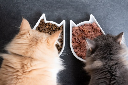 並んで食べる2匹の猫