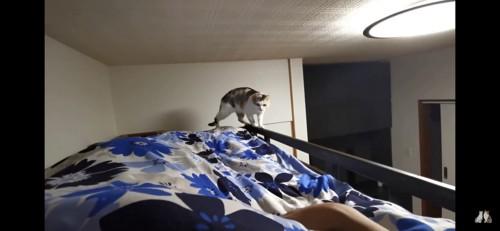 ベッドの縁を歩く猫