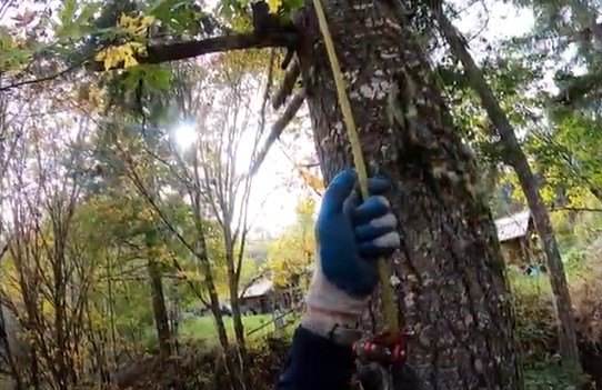 木をのぼるトム