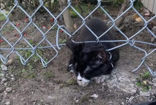 フェンスに引っかかっている子猫