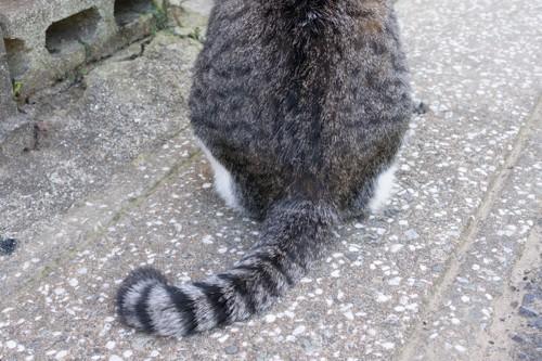 鍵尻尾の猫