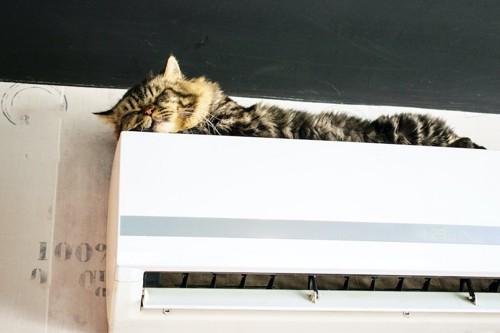 エアコンの上で眠っている猫
