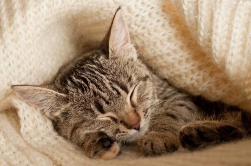 毛布の中で眠る猫