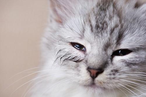 目が潤んでいる子猫