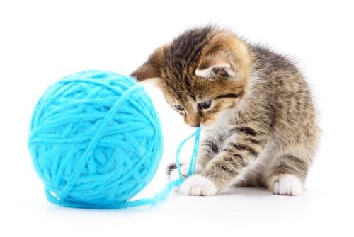 毛糸とじゃれる子猫