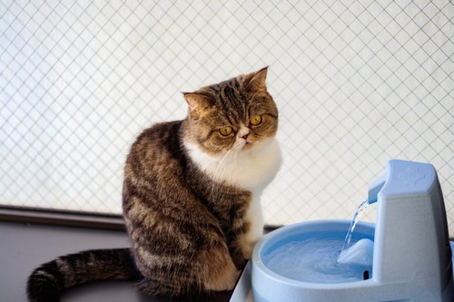 水飲み場の猫