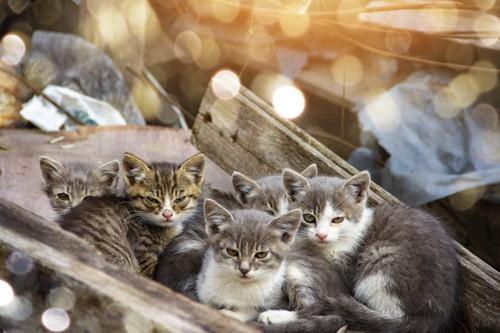 のら猫の子猫たち