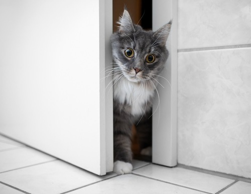 ドアの隙間から入ってくる猫