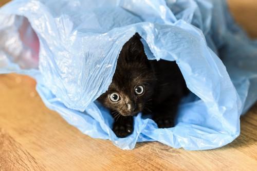 ビニール袋に入る子猫