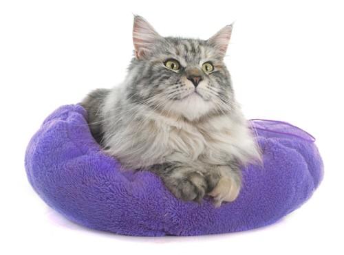 猫用のクッションに入る猫